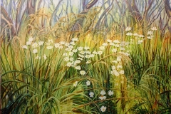 Mountain-Daisies-