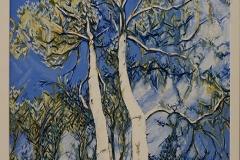 Blue sky eucalypts #3 -