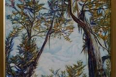 Eucalypt skies -