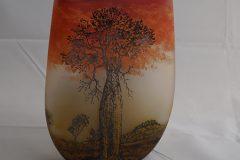 Nogoa-bottletree