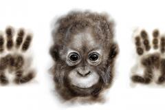 Sumatran Orang Utan infant