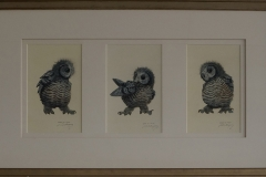 US-barred-owl-owlets-