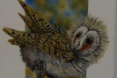 Barn-owl-owlets-
